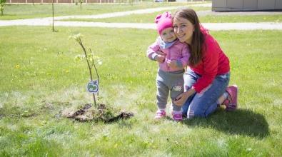 1 июня пройдет  в акция «Зеленая аллея жизни»